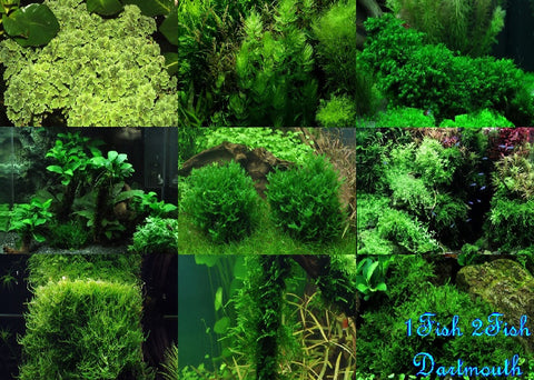 Shipped - Tropica Portions - Canada Wide - Orders of 1 Plant