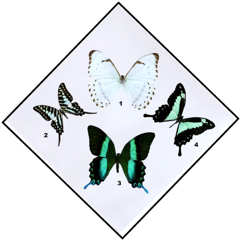 "Acrylic Display Box - Shades of Green - 4 Butterflies - 10"" X 10"" - #90010-07D"