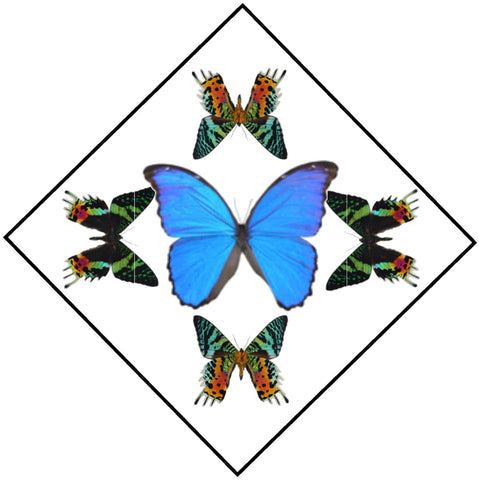 "Acrylic Display Box - Blue Morpho / Sunset Moth - Sunburst Design - 10"" X 10"" - #90010-52D"