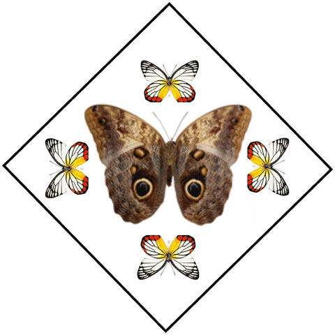 "Acrylic Display Box - Owl Butterfly / Painted Jezebels - Sunburst Design - 10"" X 10"" - #90010-53D"