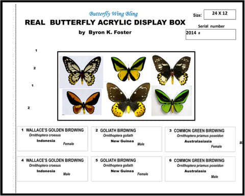 "Acrylic Display Box - 3 Pair Birdwings - 12"" X 24"" -  #91224-01"