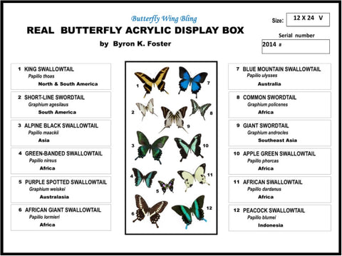 "Acrylic Display Box - 12 Butterflies - 12"" X 24"" - #91224-02"