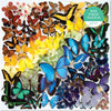 Rainbow Butterfly 500 Piece Puzzle