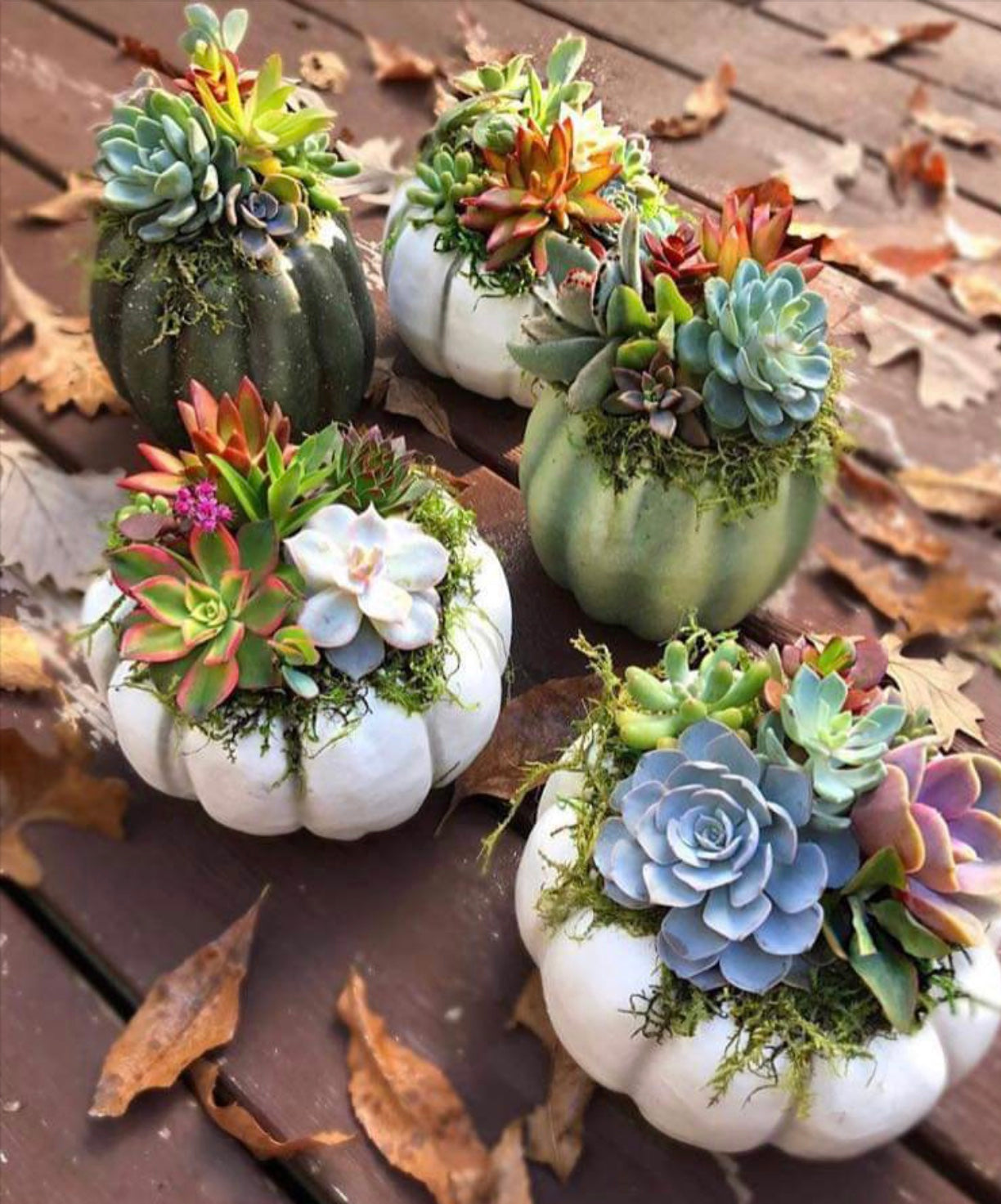 Lavender & Succulent Pumpkin Workshop - Oct 19