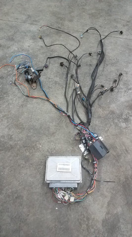 LSX STANDALONE HARNESS 240-700-900 T56 TRANSMISSION SERIES CHASSIS