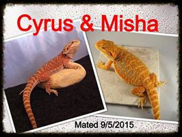 New Hatchlings Have Arrived!!!! Cyrus/Misha