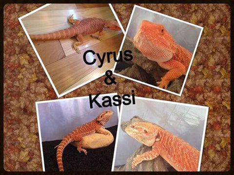 Bearded dragons for sale princeton, indiana