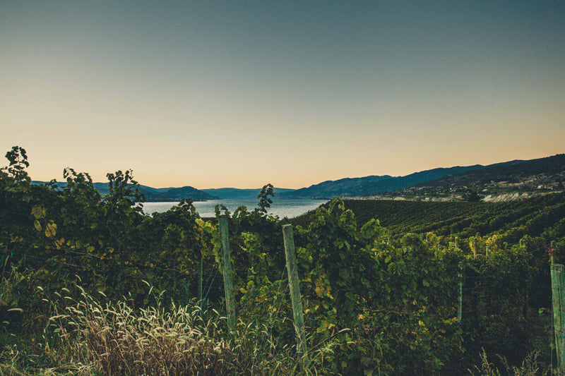 Naramata Vineyard from KVR Trail