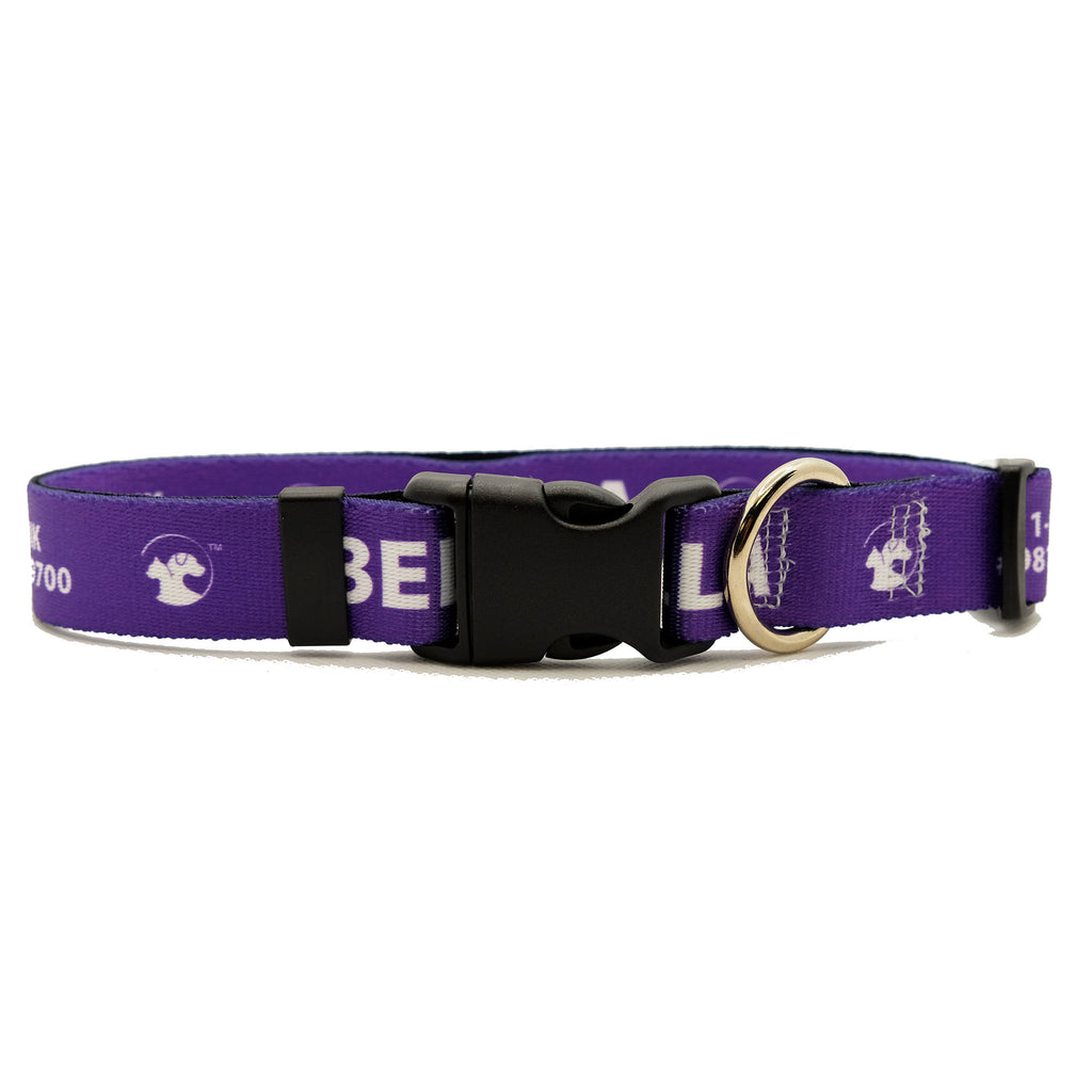 Personalized Solid Dog Collars (8 colors available)