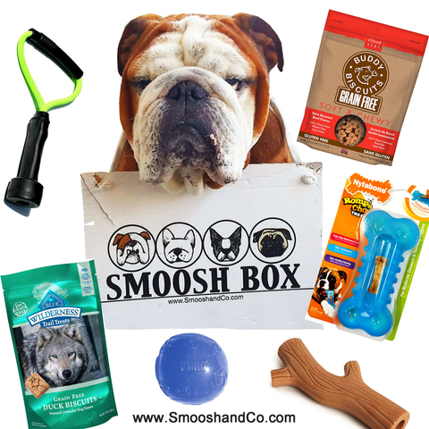 Smoosh Box MINI for English Bulldogs - Dog Only