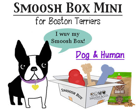 Smoosh Box MINI for Boston Terriers - Dog & Human