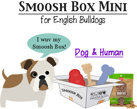 Smoosh Box MINI for English Bulldogs - Dog & Human