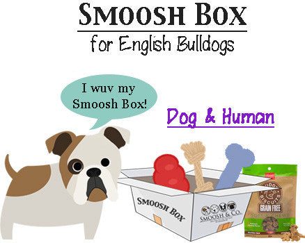 Smoosh Box for English Bulldogs - Dog & Human