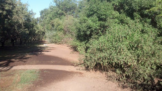 The natural vegetation on Comanche Creek serves as the perimeter of our organic orchard