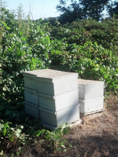 Bee hives left year round on perimeter of organic orchard