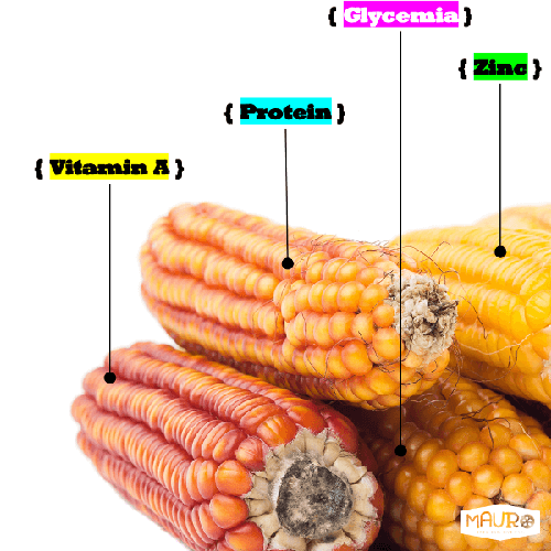 Biofortified Protein Corn Seed