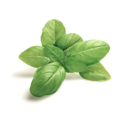 Heirloom Genovese Basil Seed from The Mauro Seed Company