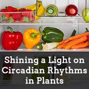 Shining a Light on Circadian Rhythms in Plants