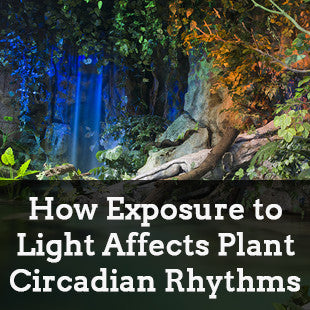 How Exposure to Irregular Light Affects Plant Circadian Rhythms