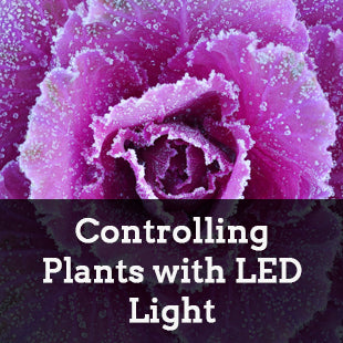 Controlling Plants with Light: LEDs to Change Plant Growth