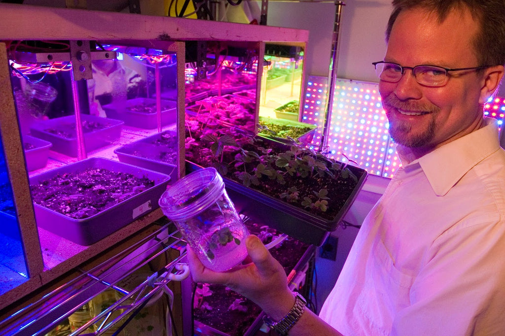 Using LEDs to Manipulate Plant Growth, Characteristics