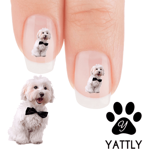 Maltese A Formal Affair - Nail Art Decals (Now! 50% more FREE)