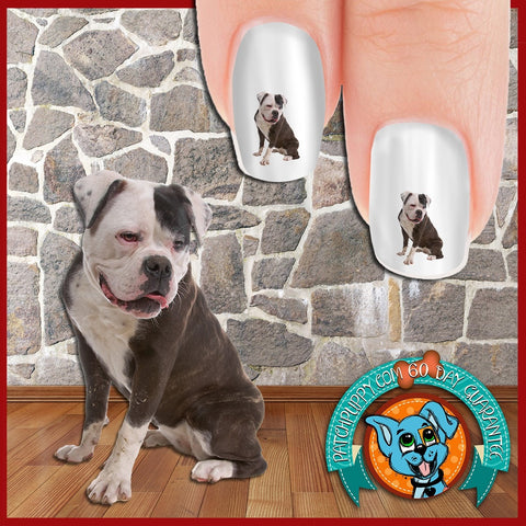 American Bulldog Side Glance Nail Art Decals (Now! 50% more FREE)