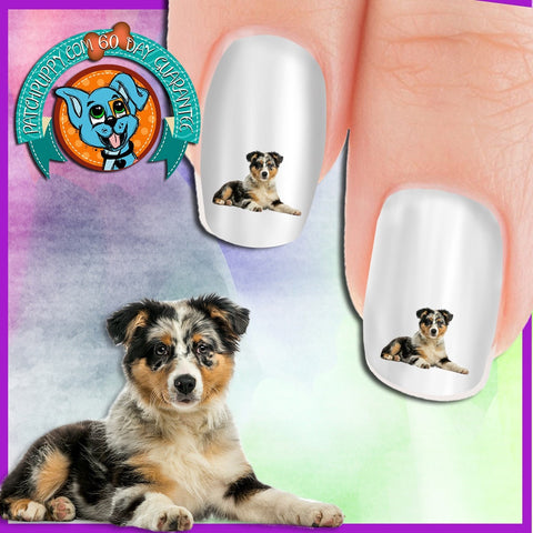 Australian Shepherd Puppy Nail Art Decals (Now! 50% more FREE)