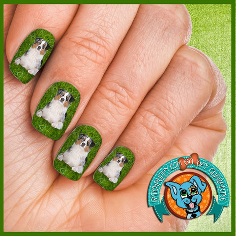 Australian Shepherd on Grass Nail Wraps