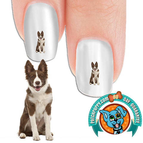 Border Collie Brown and White Nail Art Decals (Now! 50% more FREE)