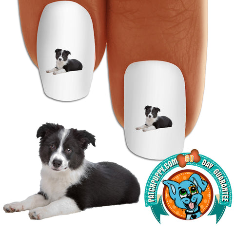 Border Collie Puppy Laying Nail Art Decals (Now! 50% more FREE)