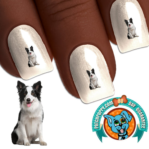 Border Collie Sitting Pretty Nail Art Decals (Now! 50% more FREE)