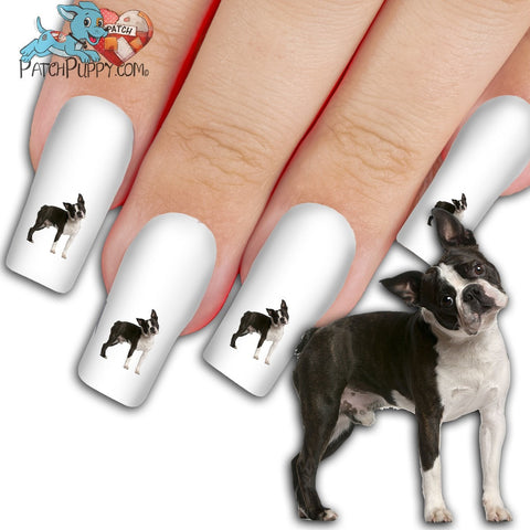 Boston Terrier What Did I Do, Ma? Nail Art Decals (NOW 50% MORE FREE)