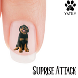 Rottweiler Suprise Attack Nail Art (Now 50% More FREE)