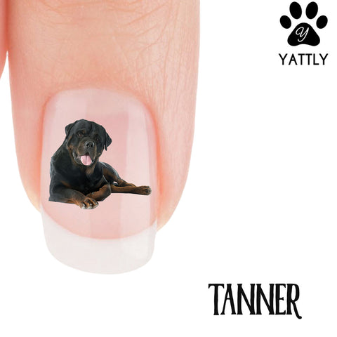 Rottweiler Tanner Nail Art (NOW 50% MORE FREE)