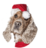 Cocker Spaniel with Santa Hat Nail Art (NOW 50% MORE FREE)