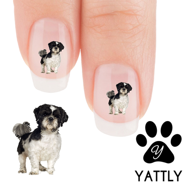 Shih Tzu Curious Nail Art Decals Now 50 More Free Patch Puppy