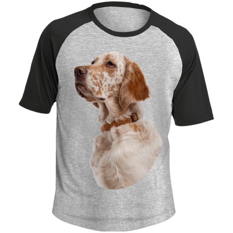 English Setter Portrait Adult SS Colorblock Raglan Jersey