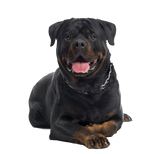 Rottweiler Happy tails Nail Art (NOW 50% MORE FREE)