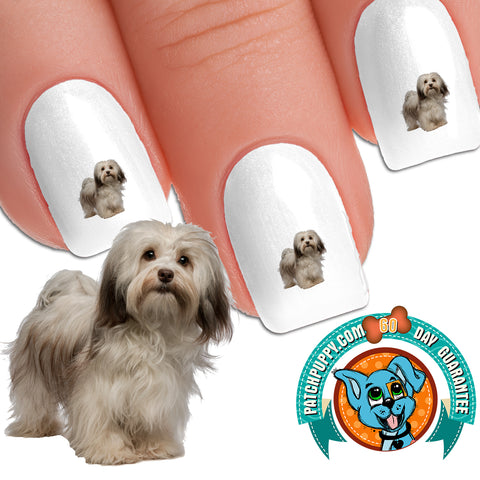 Havanese Cutie - Nail Art (NOW 50% MORE FREE)