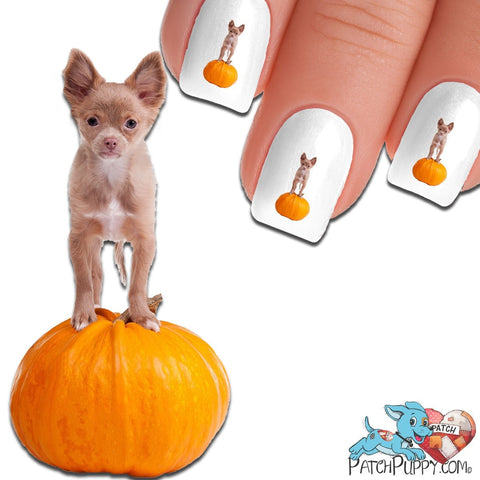 King of the Pumpkin Patch Nail Art Decals (Now! 50% more FREE)