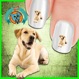 Labrador Laughing Yellow Lab Nail Art Decals (NOW 50% MORE FREE)