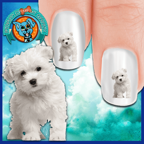 Maltese Curious - Nail Art Decals (Now! 50% more FREE)