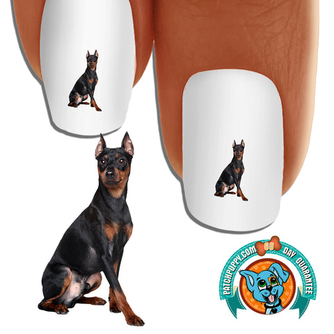 Miniature Pinscher sitting pretty Nail Art (NOW 50% MORE FREE)