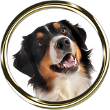 Miniature American Shepherd Portrait Nail Art (NOW 50% MORE FREE)