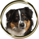 Miniature American Shepherd 2 Portrait Nail Art (NOW 50 % MORE FREE)