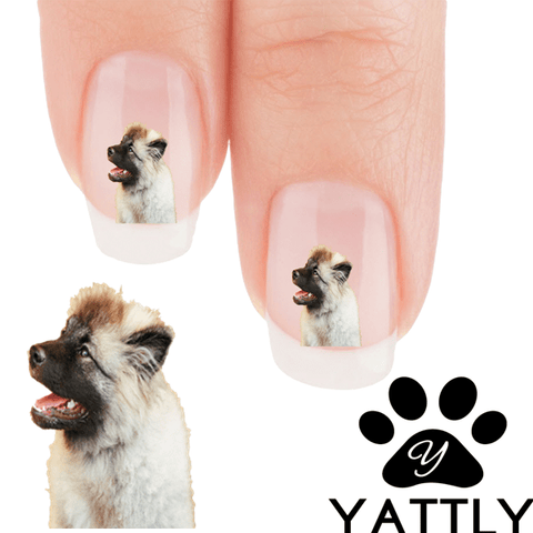Keeshond Did you say treat? Nail Art (Now 50% More Free)