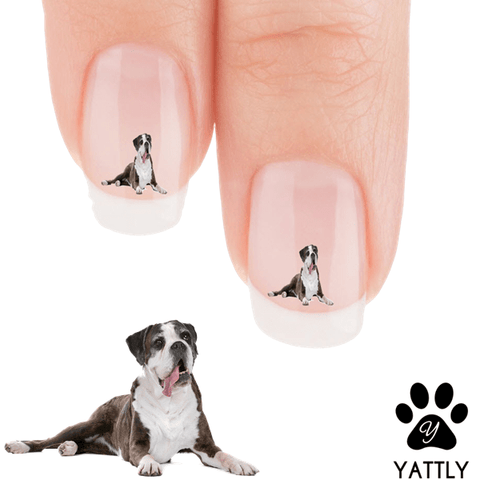 Cane Corso Mastiff Looking Foxy For The Camera Nail Art Decals (NOW 50% MORE FREE)