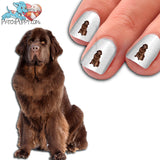Newfoundland (brown) Nail Art (NOW 50% MORE FREE)