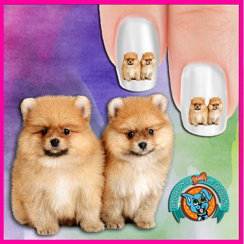 Pomeranian 2 of a kind Nail Art Decals (Now 50% more!)